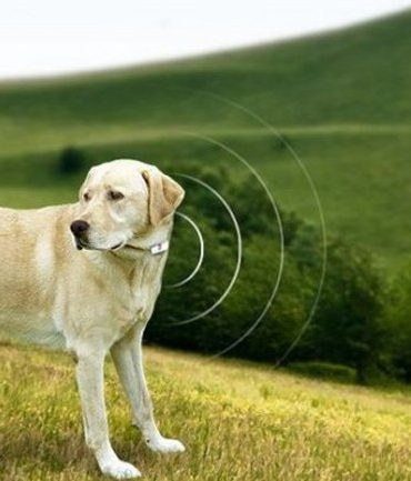 Tecnología Mascotas